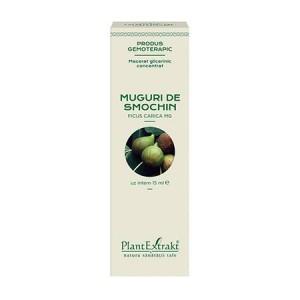 Extract din muguri de SMOCHIN - Ficus carica MG (concentrat), 15 ml, PlantExtrakt